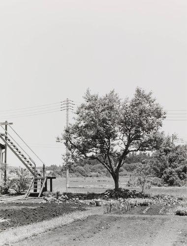 Tochigi, from the series Under Horse Chestnut