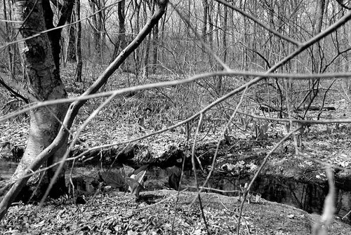 Site of the Killing of Metacom (King Philip), Bristol County, Rhode Island, from the series Sweet Medicine