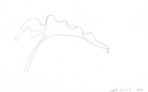 Leaf VI