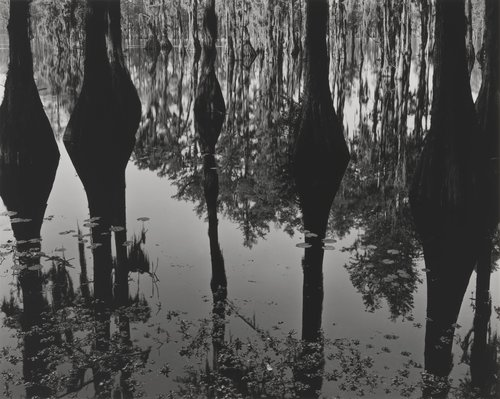 Untitled (Swamp - Deep South)