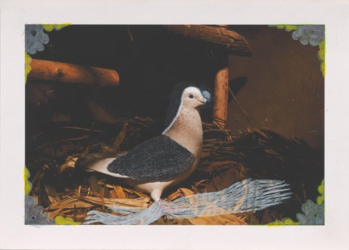 Untitled, from the series Wild Pigeon
