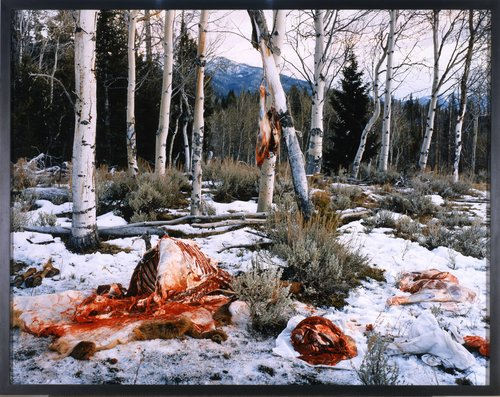 Elk Quartered and Boned near Milky Creek, White Clouds Mountains, Idaho