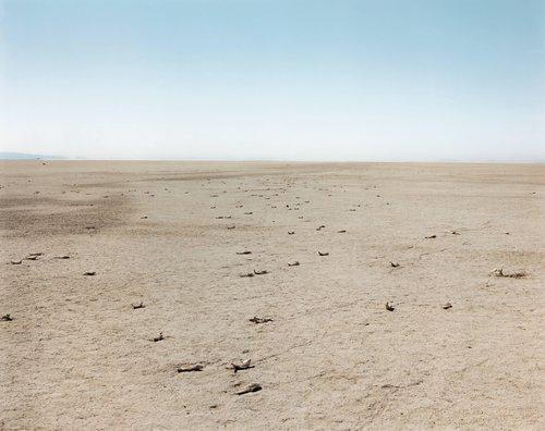 Dead Fish, Bravo 20 Bombing Range, from the series Desert Canto V: The War