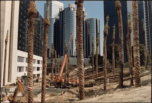 Landscaping at the Sheraton Grande Hotel, Los Angeles, California