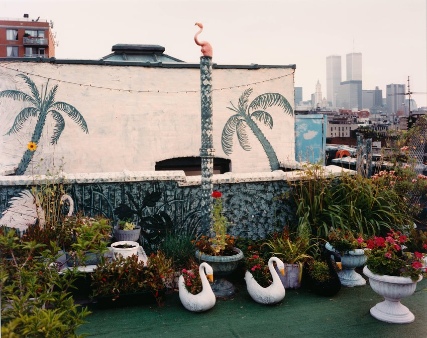 image of 'Rooftop Garden, East Village, New York, from the series No Ordinary Land'
