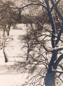 image of 'Trees from Ahwahnee Hotel Window, Yosemite Valley, California'