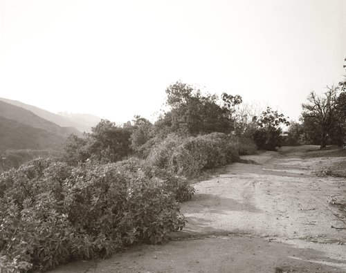 Edge of abandoned grapefruit orchard, above Loma Linda, California