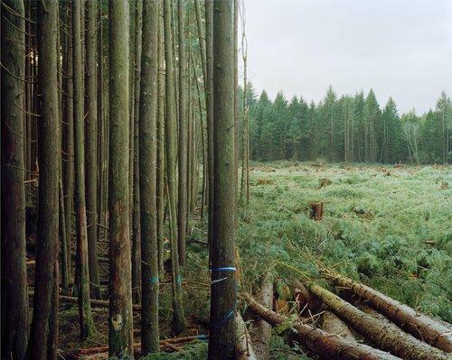 Freshly Felled Trees, Nemah, Washington, from the series Sawdust Mountain