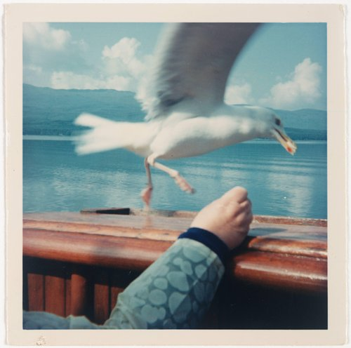 Untitled [Seagull]