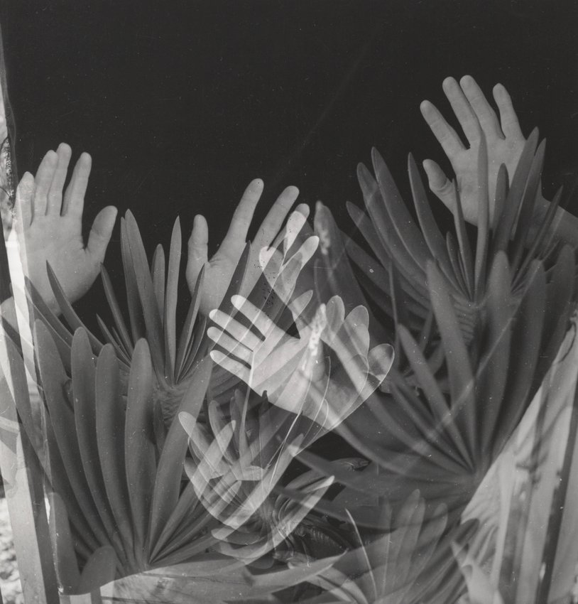 image of 'Hands and Aloe Plicatilis'