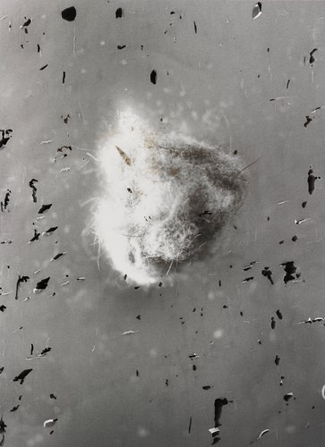 Untitled 3, from the series Dust Balls