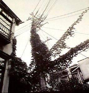image of A Place in the Sun—Sakuragaoka, Shibuya, 1983