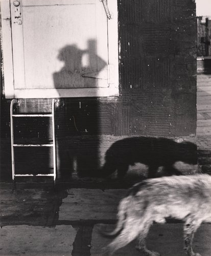 "My Shadow with Dog ""Schubi"""
