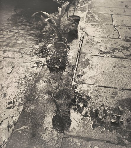 Untitled (Plants at Gutter, Paris)