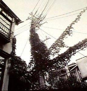 A Place in the Sun—Sakuragaoka, Shibuya, 1983
