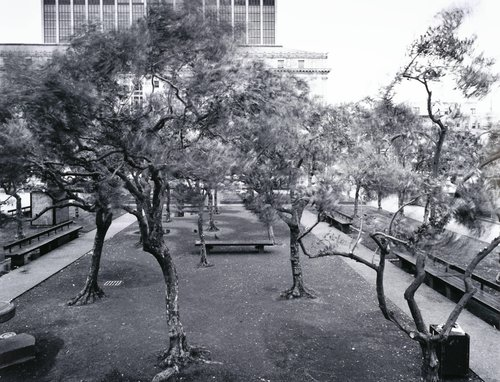 Trees, from the series Settings - The Civic Center Project