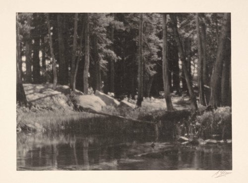 A Grove of Tamarack Pine, Near Timber Line, from the portfolio Parmelian Prints of the High Sierras