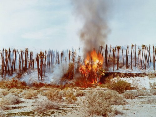 Desert Fire #1, Burning Palms