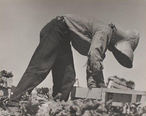 Filipino Lettuce Worker, Salinas, California