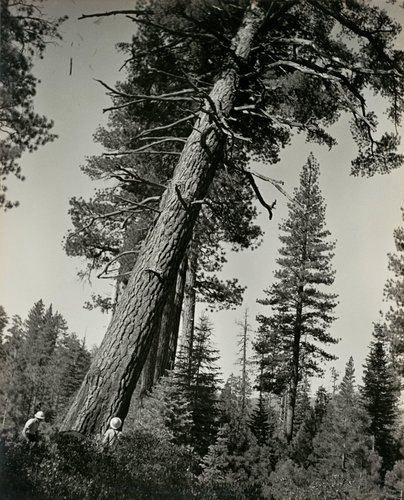 Untitled (The faller decides where the tree must lie on the ground), from the Red River series