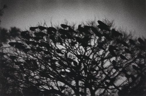 Kanazawa, from the series Ravens