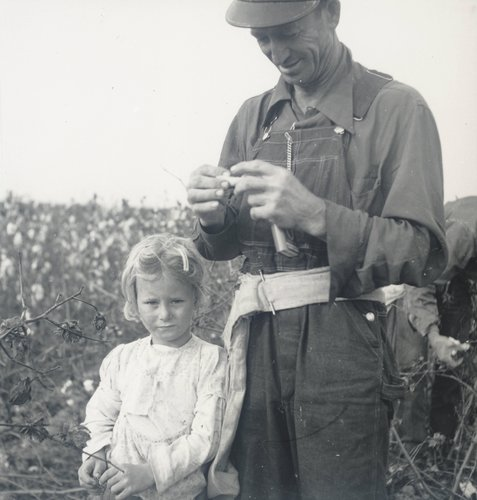 Untitled (Family Picking Cotton), Buttonwillow, California