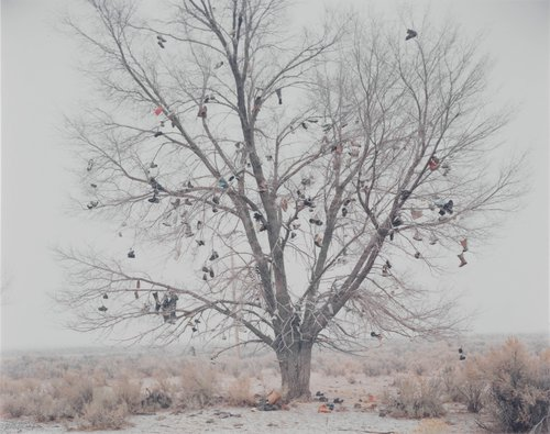Shoe Tree #2 (Modoc County, California)