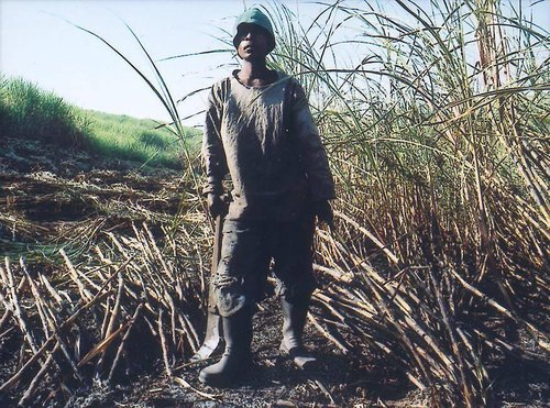 Untitled, from the series Sugar Cane