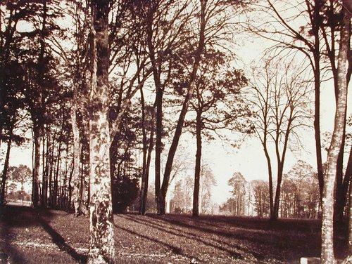Park Scene at Château de Vivier