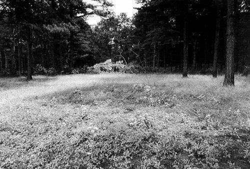 New Echota, Cherokee Capital and Treaty Site, New Echota State Historical Site, Georgia, from the series Sweet Medicine