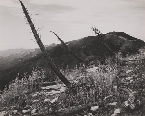 Yucca Post's Ridge #2