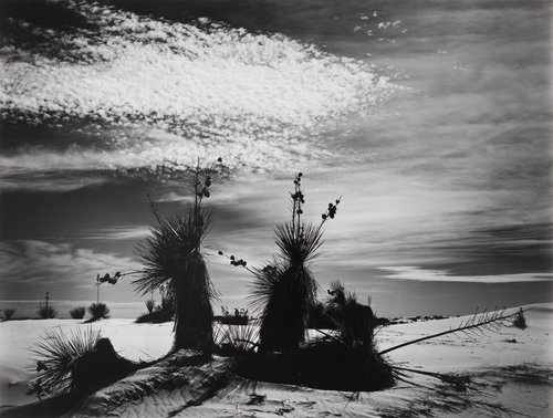 Untitled (White Sands, New Mexico)