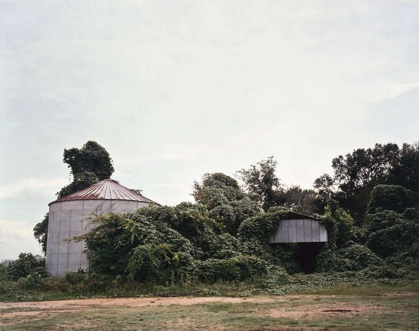 image of Kudzu and Buildings, Greensboro, Alabama