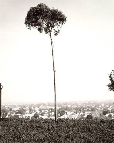 On Signal Hill, Overlooking Long Beach, California