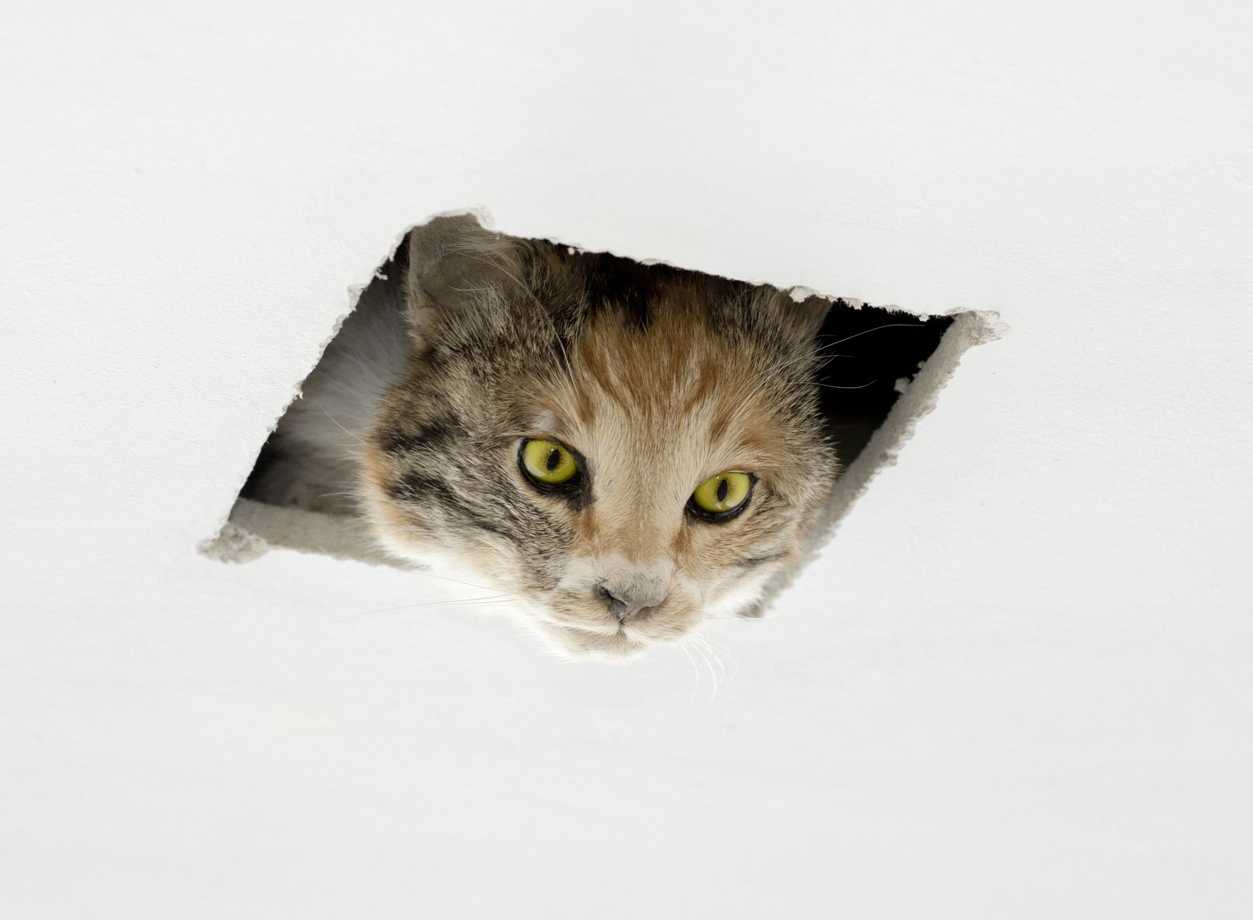 a cat peering through a rectangular cutout of a wall or ceiling