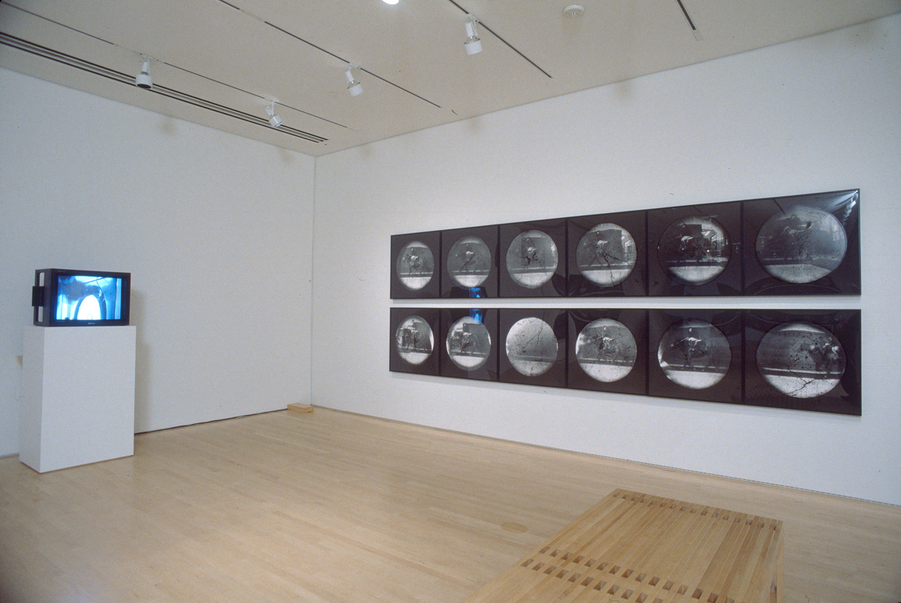 Two rows of round photographs hanging on a wall near a television