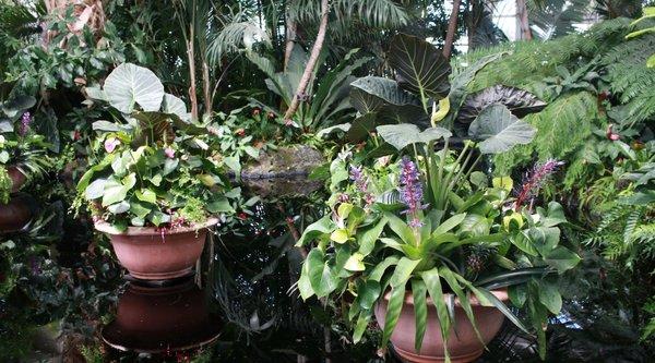 Photo of NY Botanical Garden
