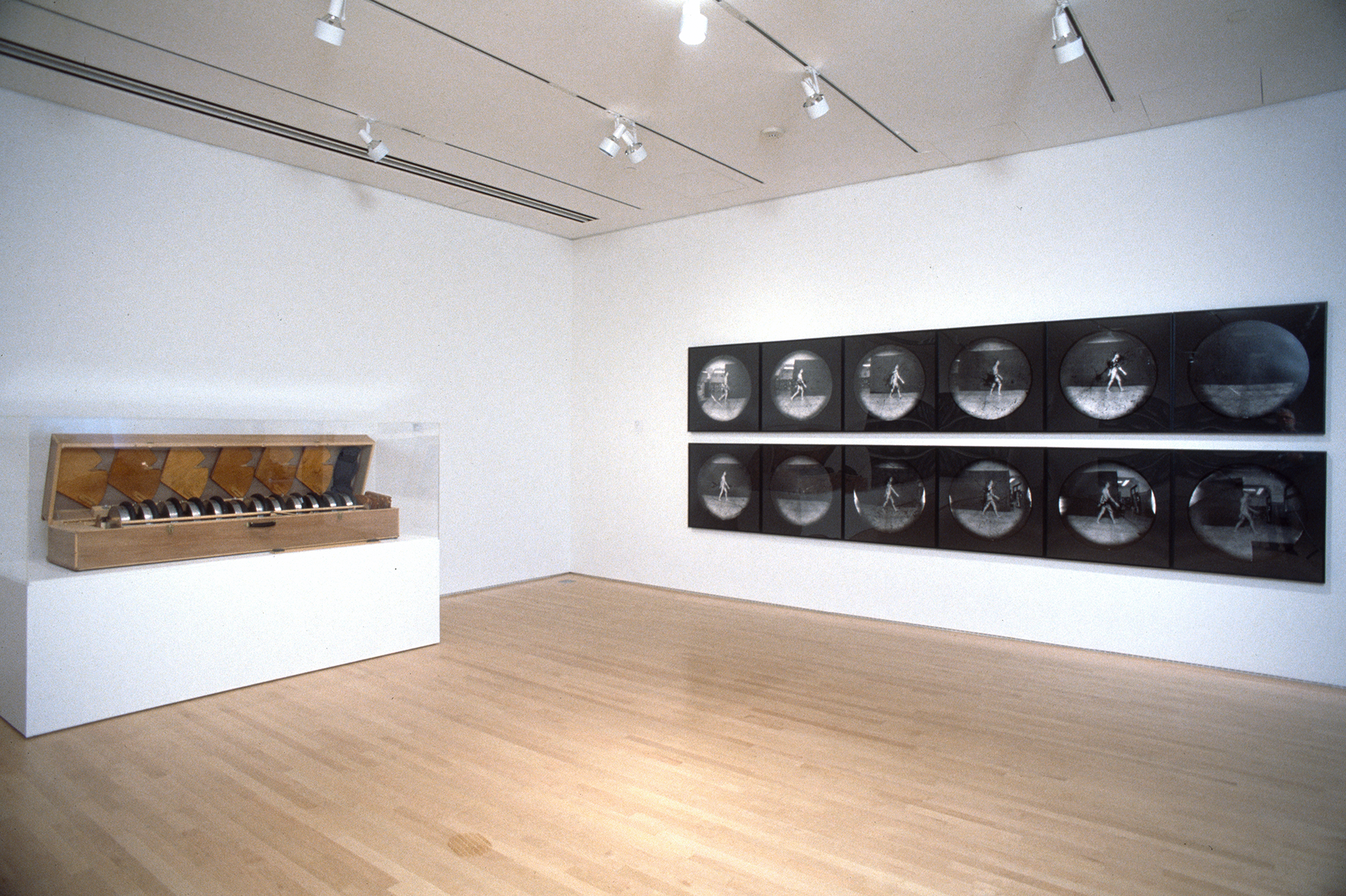 Two rows of round photographs hanging on a wall near a large wooden case