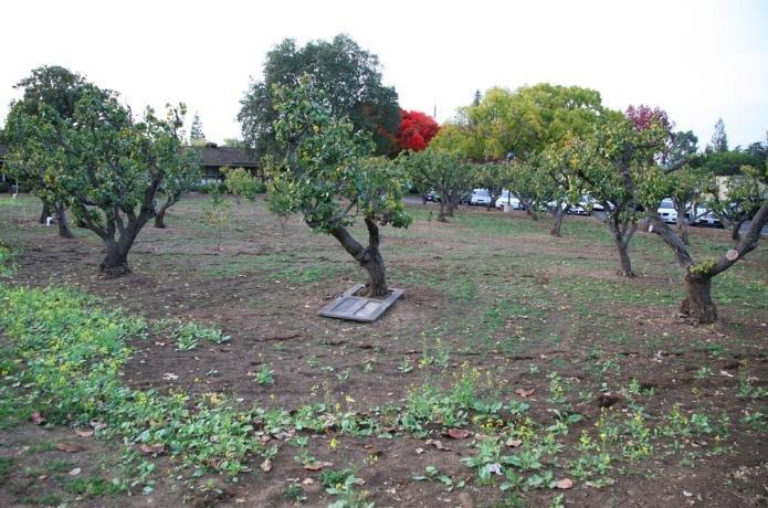 Image of Chris Johanson's The Field Became an Orchard Became a House and Became an Orchard (in Los Altos)