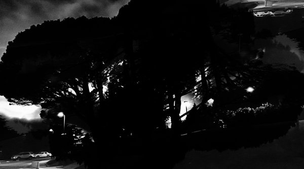 A moody image of a tree in the night