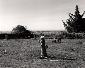 landscape with thin tree stump and tree in background