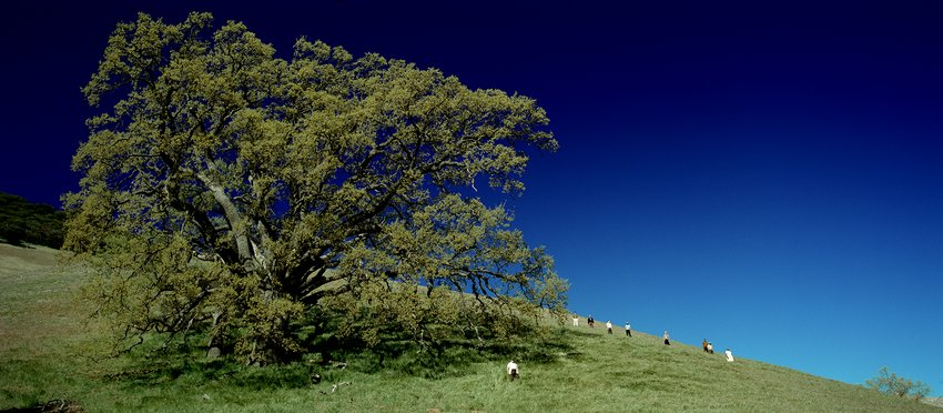 A color photograph of a grassy hill with a tree and a bright blue sky, Parreno