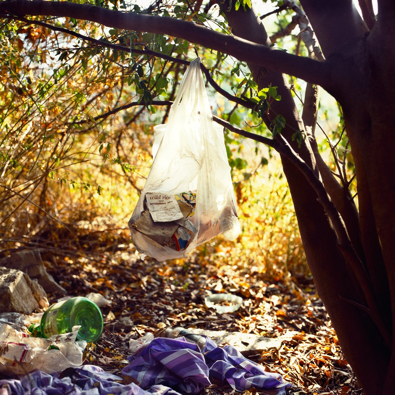 A plastic bag hangs from a tree, amongst various items strewn across the ground
