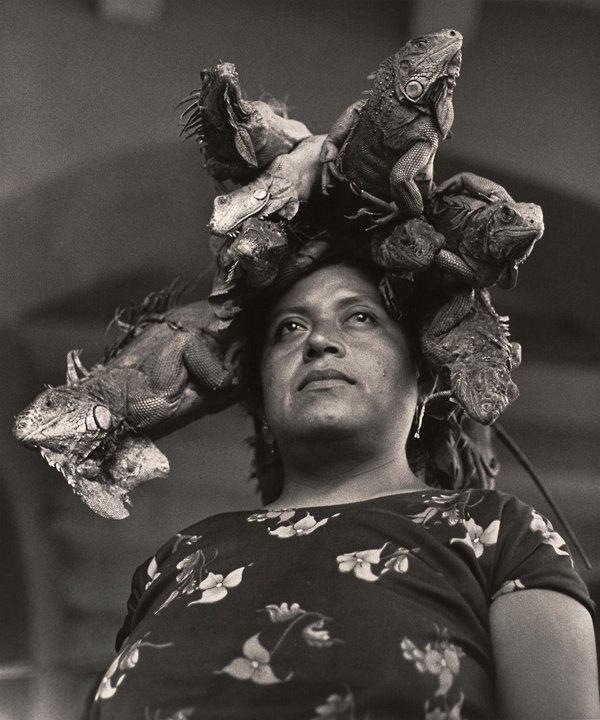 photo of woman with iguanas on head