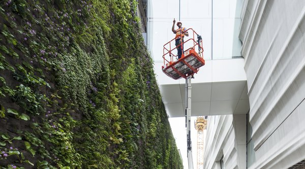 A crane rises between a living wall and the white, undulating facade.
