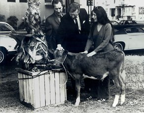 photo of performance by Bonnie Ora Sherk, talking to two men and petting cow
