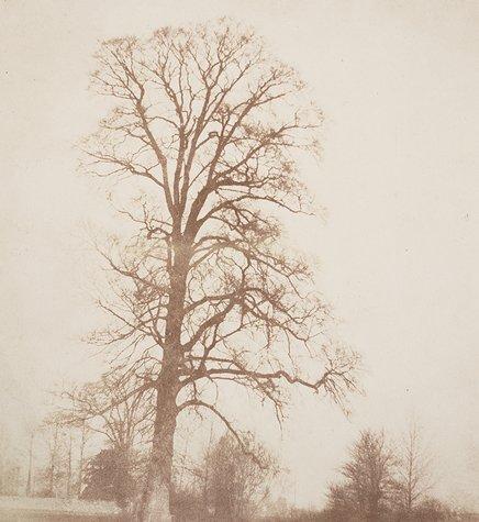 William Henry Fox Talbot, Elm in Winter, ca. 1845