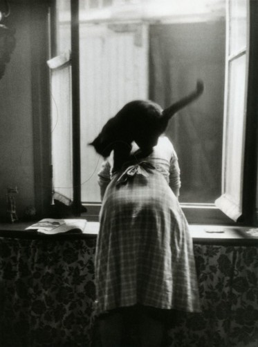 Willy Ronis Les Chats Paris 1954