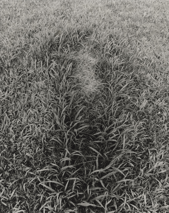 Ana Mendieta, Untitled, from the series Silueta Works in Iowa, 1978