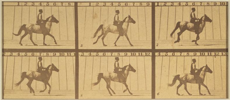 Eadweard Muybridge, Mahomet, from The Horse in Motion, 1878